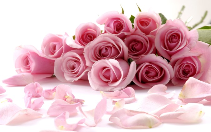 pink-roses-flowers-pictures-wallchips_371450